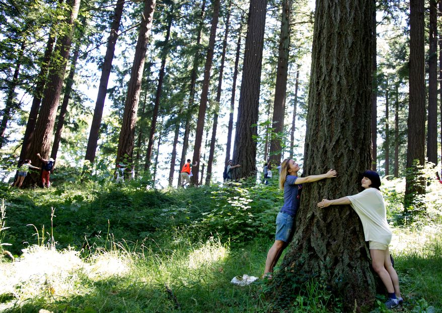 People hug trees at the Hoyt Arboretum in Portland, Ore., on Saturday, July 20, 2013, as part of an attempt to break the Guinness world record for the most people hugging trees simultaneously. (AP Photo/The Oregonian, Brittany Greeson)