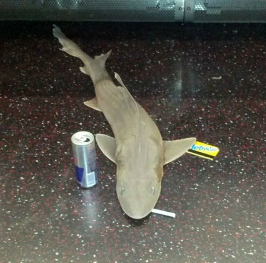 A reader emailed photos to the Gothamist website of a shark found on a New York City subway train. (Image: Gothamist screenshot)