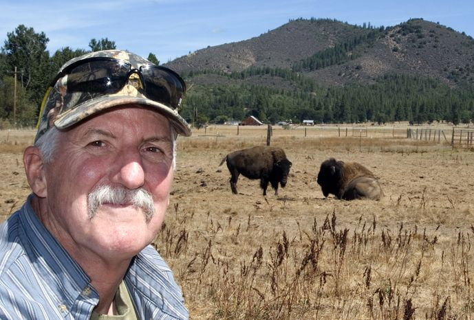 Mark Baird, pictured on Friday, Sept. 6, 2013, with two of the buffalo on his ranch outside Mugginsville, Calif., is a leader among the people in Siskiyou County who want to secede from the state and form the new State of Jefferson because rural areas are ignored in the halls of power in Sacramento. (AP Photo/Jeff Barnard)