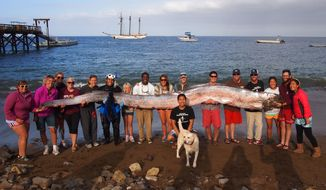This photo released courtesy of the Catalina Island Marine Institute taken on Sunday Oct. 13, 2013 shows the crew of sailing school vessel Tole Mour and Catalina Island Marine Institute instructors holding an 18-foot-long oarfish that was found in the waters of Toyon Bay on Santa Catalina Island, Calif. A marine science instructor snorkeling off the Southern California coast spotted the silvery carcass of the 18-foot-long, serpent-like oarfish. (AP Photo/Catalina Island Marine Institute )