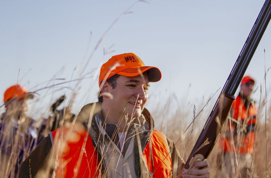 Sen. Ted Cruz, R-Texas, walks through tall grass during a pheasant hunt hosted by Rep. Steve King, R-Iowa, on Saturday, Oct. 26, 2013, in Akron, Iowa. Cruz attended the Iowa GOP's annual fundraising dinner in Des Moines, Iowa, on Friday. (AP Photo/Nati Harnik)