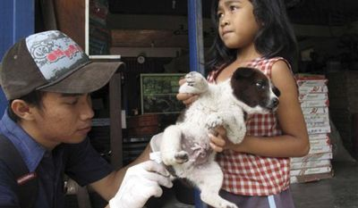 ** FILE **  A resident brings a pet dog to be vaccinated by Dr. Rico Azrenra, a veterinarian at the nonprofit Bali Animal Welfare Association in Kebon Kaja village, Bangli Regency in Bali, Indonesia, in 2010. (AP Photo/Margie Mason)
