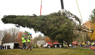 The new Rockefeller Center Christmas tree, a Norway spruce about 80-feet tall, is loaded on to a trailer from the property of the Vargoshe family in Shelton, Conn., on Thursday, Nov. 7, 2013. The tree-lighting ceremony is scheduled for Dec. 4. The tree will remain on display until Jan. 7.  (AP Photo/The Connecticut Post, Brian A. Pounds)