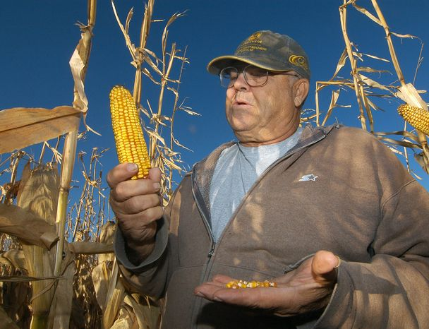 In this Oct. 24, 2013, photo Robert Malsom checks corn in one of his fields near Roscoe, S.D. Malsam nearly went broke in the 1980s when corn was cheap. So now that prices are high and he can finally make a profit, he's not about to