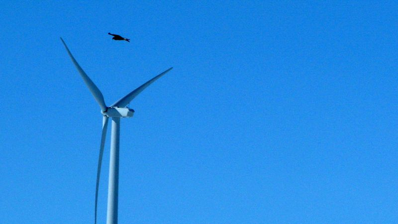 A golden eagle flies above a wind turbine on Duke Energy's Top of the World wind farm in Converse County, Wyo., on Thursday, April 18