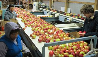 Workers in Central Lake, Mich., prepare apples for shipment. Despite a bumper crop this year in Michigan, China still produced roughly half of the world's crop. Beijing is using its clout to press for expanded access to the long-restricted American market. (Associated Press)
