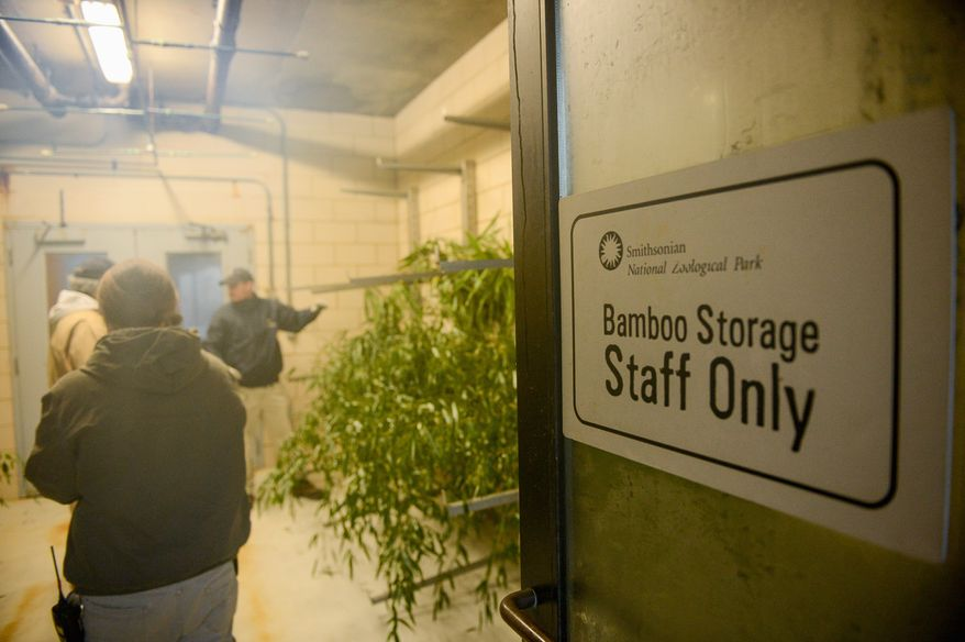 Animal keepers Bernard Graham, Eric Smith and Brian Cannon unload bamboo at the National Zoo commissary, whose staff stores, prepares and delivers food for the zoo's 2,000 animals. It costs about $1.2 million a year to feed all the animals. (Andrew Harnik/The Washington Times)