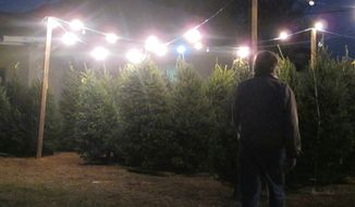 **FILE** Fraser fir Christmas trees are offered for sale at a tree lot in Mount Pleasant, S.C., on Nov. 28, 2012. (Associated Press)