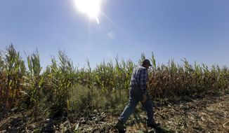 This photo taken Oct. 16, 2013 shows Larry Hasheider walking along one of his corn fields on his farm in Okawville, Ill. Hasheider grows soybeans, wheat and alfalfa on the farm, nestled in the heart of Illinois corn country where he also has 130 dairy cows, 500 beef cattle and 30,000 hogs and even gives tours, something he says he never would have done 20 years ago. Add one more item to the list of chores that Larry Hasheider has to do on his 1,700-acre farm: defending his business to the American public. There's a lot of conversation about traditional agriculture recently, and much of it is critical. Among the issues people are concerned about: genetically modified crops, overuse of hormones and antibiotics, inhumane treatment of animals and whether the government subsidizes unhealthy foods. (AP Photo/Jeff Roberson)