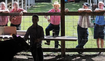 File-This Aug. 2, 2013a file photo shows Adults watching as a girl shows her animal at the 4-H Beef Show during the Blue Earth County Fair in Garden City. Shareholders of the fair have voted to move the 154-year-old fair from its historic location in tiny Garden City to the edge of Mankato. (AP Photo/John Cross, Mankato Free Press)