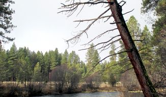 The Metolius River flows near Camp Sherman, Ore., Jan. 9, 2014.   Even in the dead of winter, the Metolius River has the ability to inspire with  pine-needle-softened trails, crystal-clear water and towering ponderosa pines. (AP Photo/Mark Morical, The Bend Bulletin)