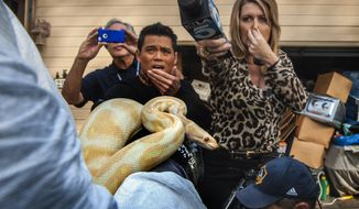 While interviewing  Sondra Berg, Santa Ana Police Animal Services supervisor, television reporters Bobby DeCastro, from FOX11, and Wendy Burch, of KTLA 5 plug their noses to avoid the stench emanating from the house with of dead and decaying snakes in Santa Ana, Calif. Berg holds an albino ball python that was one of the surviving snakes in the home.   (AP Photo/The Orange C ounty Register, Bruce Chambers)   MAGS OUT; LOS ANGELES TIMES OUT