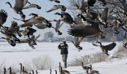 Polo Morales photographs the frozen Detroit river as a Canada geese prepare to land on Belle Isle in Detroit, Tuesday, Jan. 28, 2014. The morning low of 9 degrees below zero at Detroit Metropolitan Airport in Romulus broke the previous record low for Jan. 28 of 8 below set in 1977, the National Weather Service said. (AP Photo/Carlos Osorio)