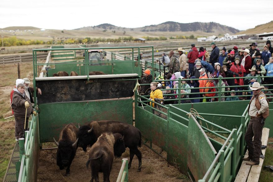 FILE - In this Sept. 27, 2013 file photo, visitors watch as buffalo are processed through health checks and branding for calves after the 48th Buffalo Roundup at Custer State Park in Custer, S.D. Visitation and camping in South Dakota's state parks reached all-time highs in 2013 for the second year in a row.  The state Department of Game, Fish and Parks says the biggest draws were Custer State Park in the Black Hills and Lewis and Clark Recreation Area near Yankton. The two parks also set their own records for number of visitors, at 1.9 and 1.2 million, respectively. (AP Photo/Rapid City Journal, Benjamin Brayfield, File)