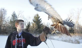 """Haakon Stand catches a Red-tailed Hawk he takes care of named Athena on Friday, Jan. 17, 2014 in Rochester. """"A lot of red tails die their first year, like eighty percent. So, because of the state law where you can only capture birds in their first year, it probably helped Athena because she probably would have died,"""" said Stand.(AP Photo/The Rochester Post-Bulletin, Joe Michaud-Scorza)"""