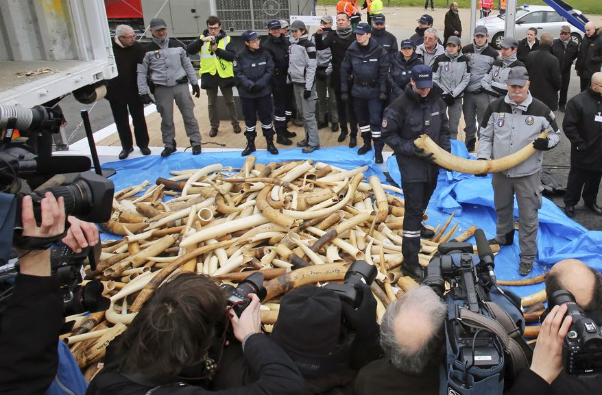 French Customs employees pose for reporters next to about 698 elephant tusks, before crushing them into dust, at the foot of the Eiffel Tower in Paris, Thursday Feb. 6, 2014. France is crushing more than 3 tons of illegal ivory in Europe's first destruction of a stockpile of the banned elephant tusks. Thursday's pulverization is intended to send a message to poachers and traffickers that preservationists hope will help stem the illicit trade that endangers the species' survival. (AP Photo/Remy de la Mauviniere)