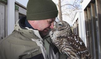 """In this Jan. 21, 2014 photo, Illinois Raptor Center program director Jacques Nuzzo nuzzles a barred owl in an attempt to get it to preen at Rock Springs Nature Center in Decatur Ill. The owl was part of """"Hoot-Enanny!"""" hosted Jan. 25 by the center, giving visitors a look at the owls of Central Illinois and how they really live. (AP Photo/Herald & Review, Jim Bowling)"""