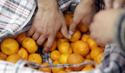 People buys some of Mukhmunad Ashabokova's tangerines off of her cart at the Abkhazian border Wednesday, Feb. 5, 2014, near Sochi, Russia. Most days in the tangerine season, she rolls her squat cart loaded down with the fruit across the bridge over Psou River from her garden about two miles inside Abkhazia. (AP Photo/Morry Gash)