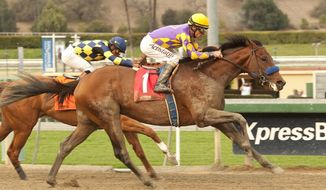 In a photo provided by Benoit Photo, Candy Boy, with jockey Gary Stevens, right, overpowers Chitu, with Martin Garcia, to win the Grade II, $200,000 Robert B. Lewis Stakes horse race, Saturday, Feb. 8, 2014, at Santa Anita Park in Arcadia, Calif. (AP Photo/Benoit Photo)