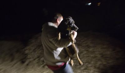 Alexei, an animal activist who would only give his first name, carries a stray from a safe house to his waiting car in the early morning hours of Tuesday, Feb. 11, 2014, in Sochi, Russia, home of the 2014 Winter Olympics. Alexei is one of a dozen people in the emerging movement of animal activists in Sochi alarmed by reports that the city has contracted the killing of thousands of stray dogs before and during the Olympic Games. Stray dogs are a common sight on the streets of Russian cities, but with massive construction in the area the street dog population in Sochi and the Olympic park has soared. Useful as noisy, guard dogs, workers feed them to keep them nearby and protect buildings. They soon lose their value and become strays. Tonight, a few dogs will be taken on their way to a new life in Moscow. (AP Photo/David Goldman)
