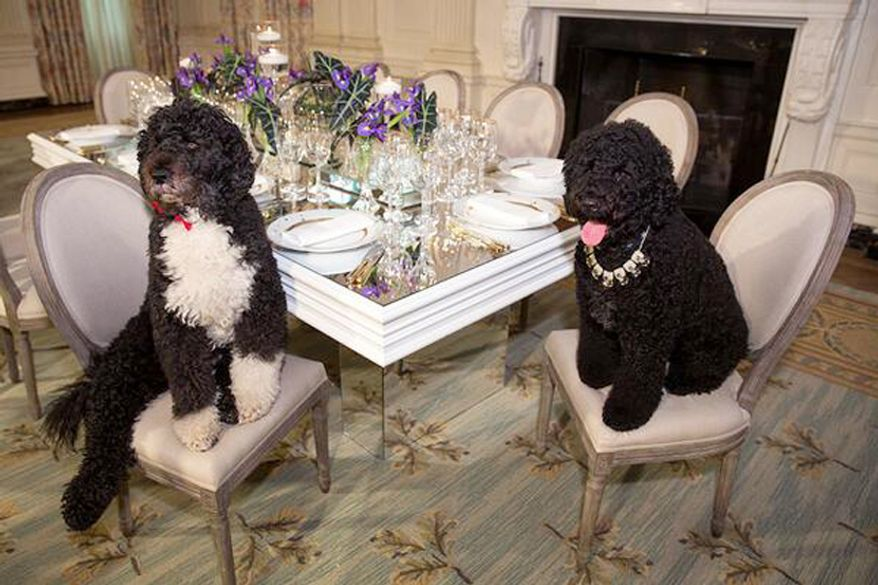 Bo and Sunny Obama were decked out early for Tuesday night's State Dinner. Twitter@Flotus