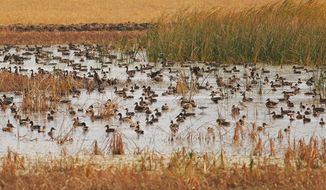 FILE - This 2005 photo provided by the North Dakota Game and Fish Department shows waterfowl swimming on wetland in McHenry County, N D. The federal government is setting aside $35 million over three years to help landowners conserve wetlands and grasslands in the five-state Prairie Pothole Region. The money is part of an incentive program built into the farm bill that President Obama signed into law. Wildlife officials say the region of North Dakota, South Dakota, Minnesota, Iowa and Montana provides important breeding and nesting habitat for more than 60 percent of the nation's migratory waterfowl. (AP Photo/North Dakota Game and Fish Department, File)