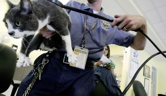 Jacob Miller scans a cat for a microchip at the East Valley Animal Shelter in the Van Nuys section of Los Angeles in this July 20, 2011, file photo. (AP Photo/Richard Vogel, File)