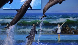 North Korean trainers direct dolphins performing at a dolphinarium in Pyongyang, North Korea, Friday, Feb. 28, 2014.   (AP Photo/Vincent Yu)
