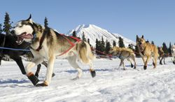 In this March 3, 2014 photo, Ramey Smyth drives his dog team into the Rainy Pass checkpoint during the 2014 Iditarod Trail Sled Dog Race near Puntilla Lake, Alaska. (AP Photo/The Anchorage Daily News, Bob Hallinen)