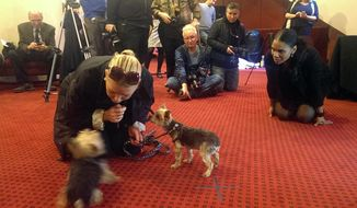 "This Tuesday, March 11, 2014 photo released by Jeffrey Richards Associates shows actress Audra McDonald, right, looking on as Catherine Grant interacts with her dogs during an animal audition in New York. The dogs were competing for the chance to star opposite McDonald on Broadway in ""Lady Day at Emerson's Bar & Grill,"" a musical that imagines one of Billie Holiday's last performances in 1959. (AP Photo/Jeffrey Richards Associates)"