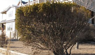 This March 8, 2014 photo shows a home being offered as a summer rental in Point Pleasant Beach, N.J.  The rental market at the Jersey shore is developing later than usual this year in parts of the region, due to a highway reconstruction project, uncertainty about which beaches will be open this summer, and a seemingly unending string of winter storms that have kept people from driving to the shore to check out vacation spots. The shore towns are counting on this summer to be better than last year's as they struggle to recover from the Oct. 2012 storm. (AP Photo/Wayne Parry)
