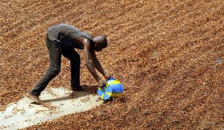 ** FILE ** In this Tuesday, April 6, 2004, file photo, a worker collects sun-dried cocoa beans to be put into into sacks for export in Guiglo, Ivory Coast. (AP Photo/Ben Curtis)