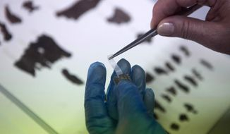 FILE -  In this May 10, 2013 file photo, an Israel Antiquities Authority employee works on fragments of the Dead Sea Scrolls in Jerusalem. Israel is building a national archaeological center to store and showcase its rich collection of some two million ancient artifacts, including the world's largest collection of Dead Sea Scrolls, Israel's Antiquities Authority said Tuesday, March 18, 2014. (AP Photo/Dan Balilty, File)