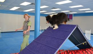 ADVANCE FOR USE SUNDAY, MARCH 23 - Dr. Jennifer Summerfield, a veterinarian with Brown Veterinary Services in Wayne, W.Va., as takes her sheltland sheepdog Remy through the clinic's indoor agility course Wednesday, March 19, 2014. (AP Photo/The Herald Dispatch, Shane Arrington)