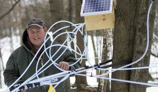 In this photo taken Friday March 21, 2014, maple syrup producer Donnie Richards poses with sap lines on a maple tree and his wireless radio unit box containing sensors that monitor pressure on sap lines in Milton, Vt. Richards has about 5,000 taps, with about 18 miles of tubing spread out over more than 100 acres and uses the wireless sensors to monitor the flow of sap that provides information  immediately on a smart phone of tablet computer. (AP Photo/Holly Ramer)