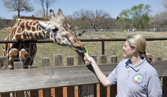** FILE ** Dr. Gretchen Cole, associate veterinarian at the Oklahoma City Zoo, feeds Ellie, a giraffe at the zoo, in Oklahoma City, Friday, April 4, 2014. (AP Photo/Sue Ogrocki)