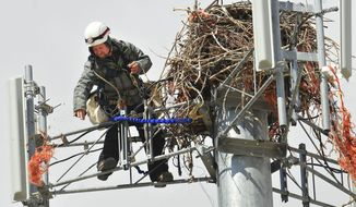 In an April 2, 2014 photo, Eric Bradford, with WesTower Communications, throws down the first bit of bailing twine from an osprey nest on top of a cell tower west of Helena, Mont. Elementry school students wrote letters to AT&T, the operator of the cell tower, to ask them to help the osprey by cleaning out strands of orange baling twine, which can be harmful to the birds.  (AP Photo/Independent Record, Eliza Wiley)