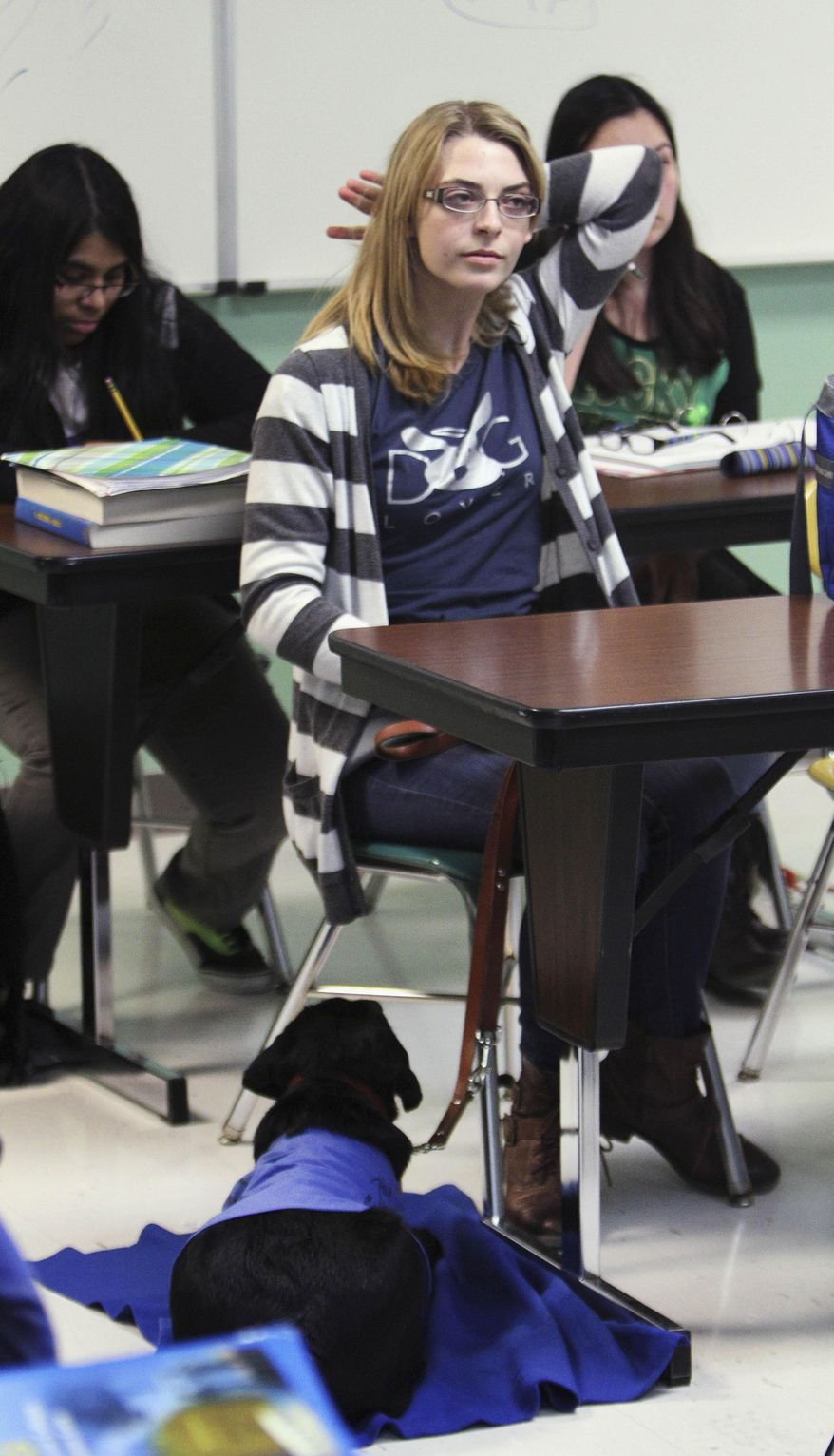 In this March 17, 2014 photo,16-year-old Abbey Perkowitz sits in class with 5-month-old Bailey, a service dog she is training at Grayslake Central High School in Grayslake, Ill. Perkowitz said the school serves as a valuable training ground for the animal she received from the nonprofit Leader Dogs for the Blind in Rochester Hills, Mich. (AP Photo/Daily Herald, Steve Lundy)  MANDATORY CREDIT, MAGS OUT