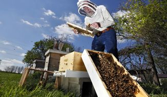 In this photo taken on Wednesday, April 23, 2014, Barry Conrad inspects his honey bees at his Canal Winchester, Ohio, honey farm. Ohio beekeepers have suffered significant damage to their bees due to weather and other factors.(AP Photo/The Columbus Dispatch, Eric Albrecht)
