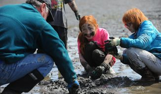 In a Tuesday, April 29, 2014 photo, volunteer Steve Tuckerman, left, helps Wade King Elementary School third-graders Amanda Davis, 9, and  Rhianna Johnson, 9, dig for clams in North Chuckanut Bay, south of Bellingham, Wash. The third-grade class did a clam survey with the help of the Whatcom Marine Resources Committee and the Puget Sound Restoration Fund.  (AP Photo/The Bellingham Herald, Philip A. Dwyer)