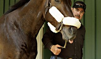 Preakness Stakes hopeful Ride On Curlin walks the shed row at Pimlico Race Course in Baltimore, Md., Monday, May 12, 2014 with trainer Billy Gowan.  (AP Photo/Garry Jones)