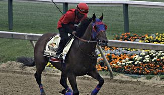 Exercise rider Domingo Navarro gallops Preakness Stakes entrant Social Inclusion at Pimlico Race Course in Baltimore, Thursday, May 15, 2014.  (AP Photo/Garry Jones)