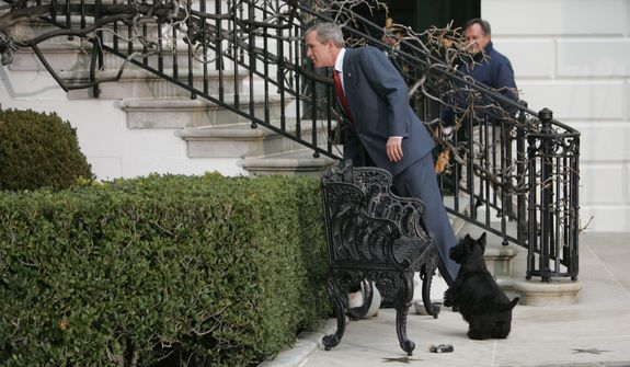 President Bush and his dog Barney search for their new puppy, Miss Beazley, a Scottish terrier, Thursday, Jan. 6, 2005, on the South Lawn of the White House. The puppy, a birthday gift to the first lady from President Bush, ran into the bushes during a photo opportunity to show off the new puppy.   (AP Photo/Ron Edmonds)