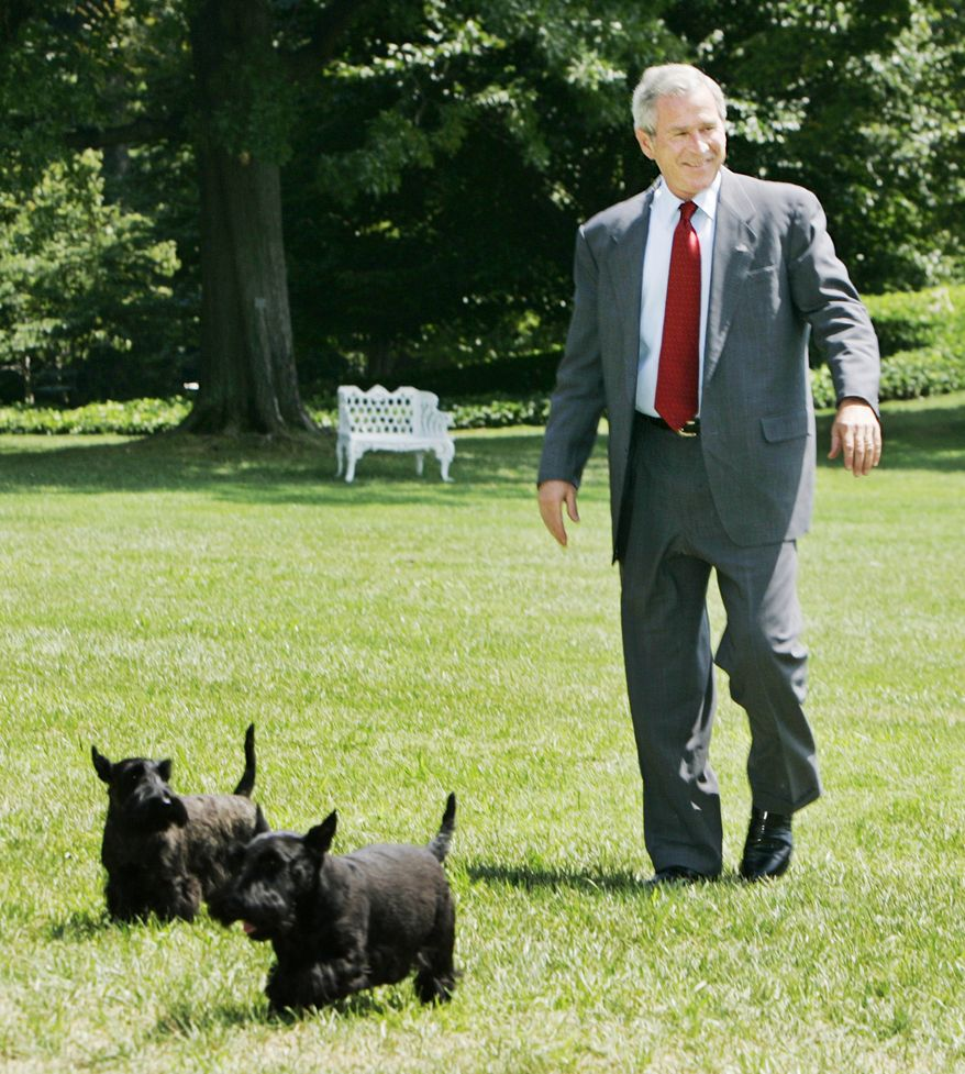 "President Bush with pet dogs Barney, front, and Miss Beazley, back, returns to the White House following a ten-day vacation at his Texas ranch, Sunday, Aug. 13, 2006, in Washington.  In a statement, he says he wants the international community to ""turn words into action"" and bring peace to the Mideast.  (AP Photo/Manuel Balce Ceneta)"