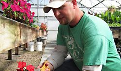 Fremont City Gardener Jon Kuddes works with plants in a greenhouse. Kuddes' duties include transplanting plants into the city-owned flower beds. (AP Photo/Fremont Tribune, Betsy Hansen)