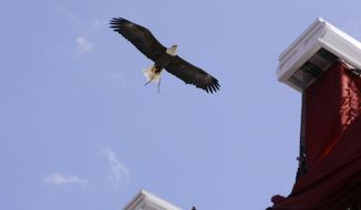 ** FILE ** Boston College's live American Eagle mascot flies over Alumni Stadium as the commencement ceremony began, Monday, May 19, 2014, in Boston. (AP Photo/Stephan Savoia)