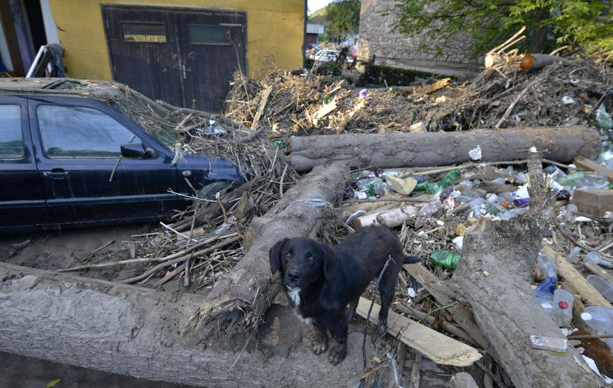 A stray dog stands on debris after devastating floods in the town of Maglaj 140 kilometers north of Sarajevo, Bosnia-Herzegovina, Monday May 19, 2014. At least 35 people have died in Serbia and Bosnia in the five days of flooding caused by unprecedented torrential rain, laying waste to entire towns and villages and sending tens of thousands of people out of their homes, authorities said. (AP Photo/Sulejman Omerbasic)