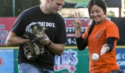 """Ryan Triantafilo helps Tara the cat throw the pitch as he held her in his arms before the Bakersfield Blaze baseball game game at Sam Lynn Ballpark Tuesday night May 20, 2014 in Bakersfield, Calif.  Tara was captured on security camera when she pounced on a dog that attacked  4-year-old Jeremy Triantafilo. The video, which has garnered 21 million YouTube views, shows the dog biting and attempting to drag the boy. Within seconds, Tara leaps out of nowhere and chases the canine away. There was a failed attempt at the game, between the Blaze and the Lancaster JetHawks, to have Tara """"throw"""" the pitch using a baseball attached to a fishing line. (AP Photo/The Bakersfield Californian, Nick Ellis)   MANDATORY CREDIT"""