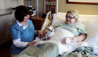 In this April 29, 2014 photo, Dee Duffy, owner of Charlie, a 5-year-old Chihuahua, visit with Marybelle Novak, 88, of Dixon, Ill., as she recovers at KSB Hospital in Dixon. Charlie is just one of several pets that regularly visits the hospital as part of the Pet and Wellness Service (PAWS) program. (AP Photo/Sauk Valley Media, Alex T. Paschal)