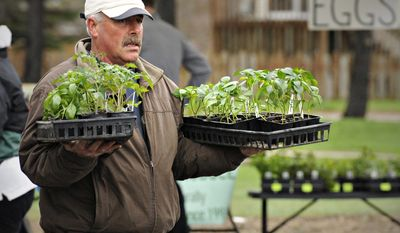 Chuck Long, Greenbush Farms, Milaca, carries a customers purchase of tomato and pepper plants to their car during the Sartell Farmers Market at the Sartell, Minn., City Hall Monday, May 12, 2014. (AP Photo/The St. Cloud Times, Jason Wachter)